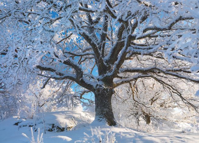 Kalte Winter in Schweden | Berg und Berg | HolzLand Bunzel in Marl und Hamm