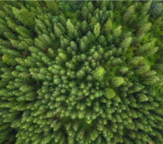 Wälder in Schweden | Berg und Berg | HolzLand Bunzel in Marl und Hamm